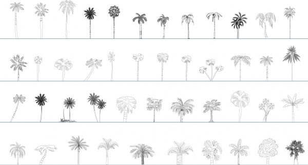 006-Vegetation-Cad-Blocks-Palms-Elevation