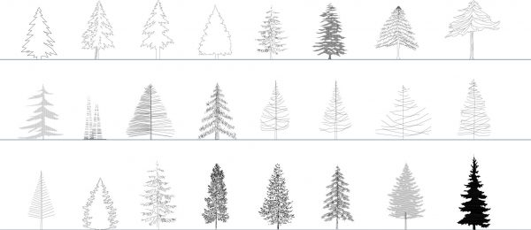 010-Vegetation-Cad-Blocks-Conifers-Elevation