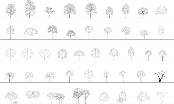 011-Vegetation-Cad-Blocks-Deciduous-Trees-Elevation