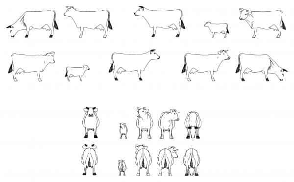 010-Cows-Cad-Blocks