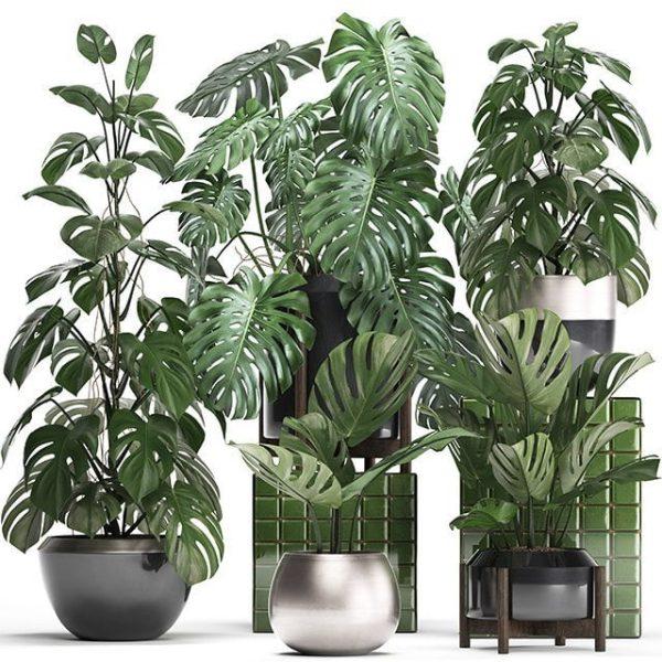 Plant 3dsmax File Free Download 014