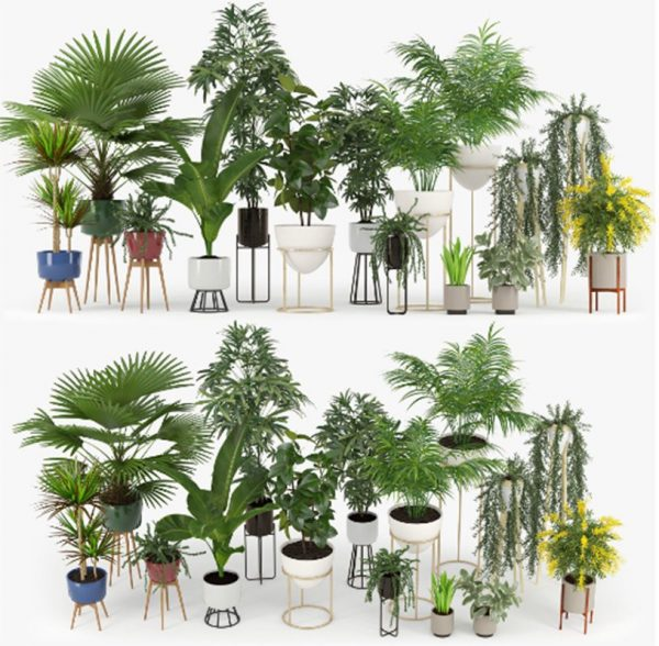Plant Collection 3d Models  Free Download 015