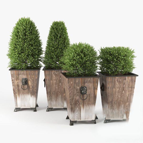 Plant 3d Model 3d Max – FBX – OBJ 020