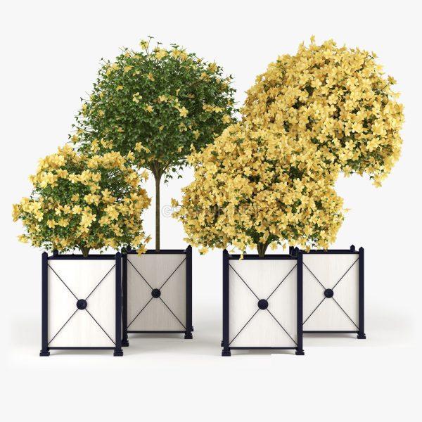 Hibiscus Plant 3d Model 3d Max – FBX – OBJ 021