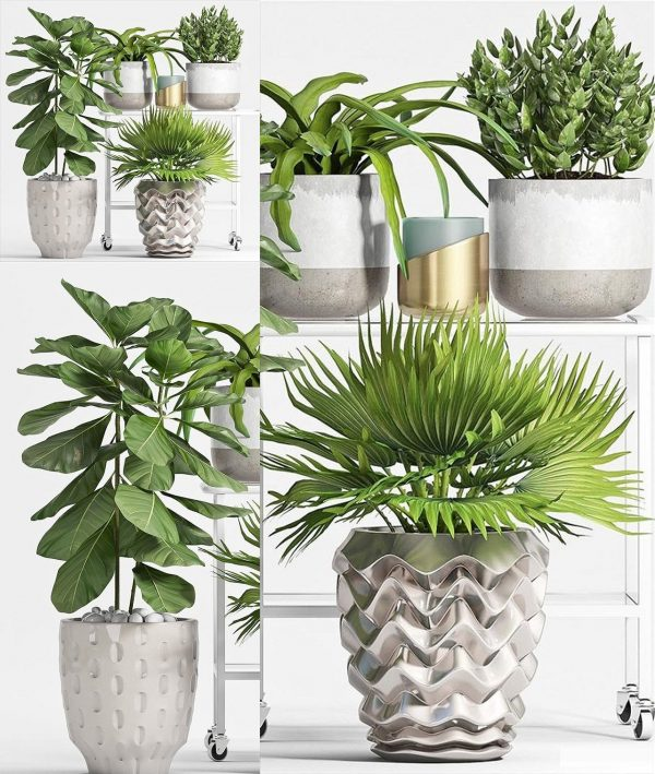 Plants Set 3d Models Free Download 025