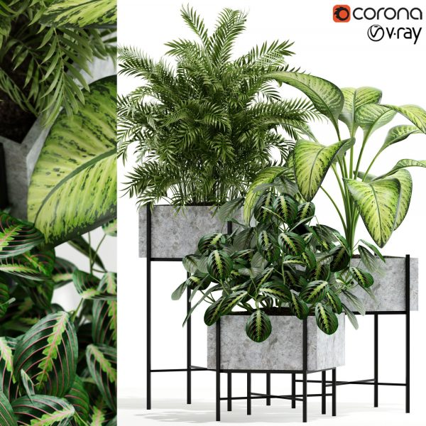 Plants Collection 3d Models Free Download 026