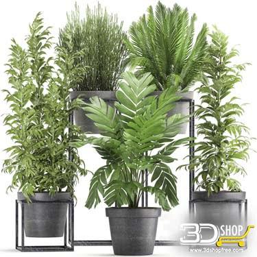 Plants Collection  3D Models 034
